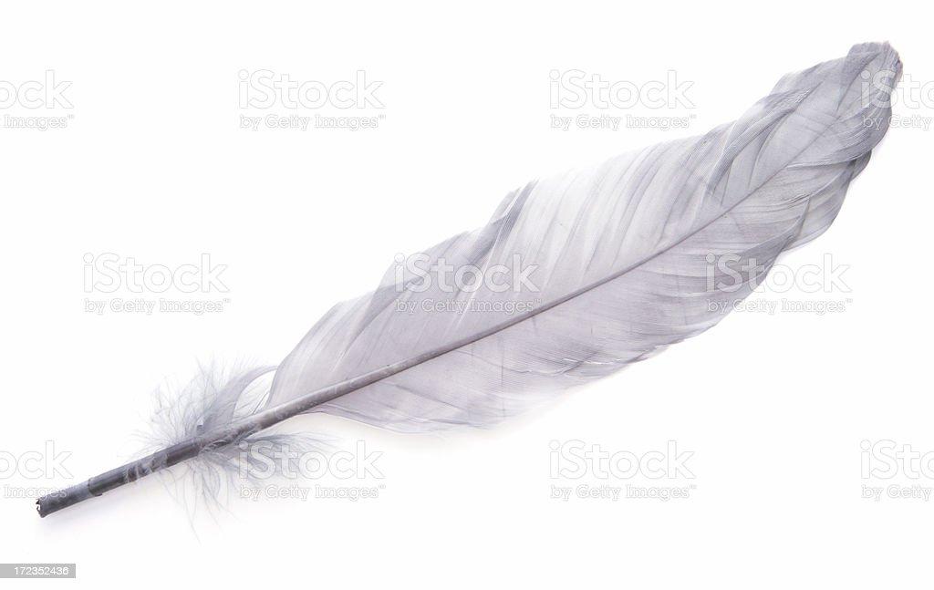 Elegant Feather stock photo