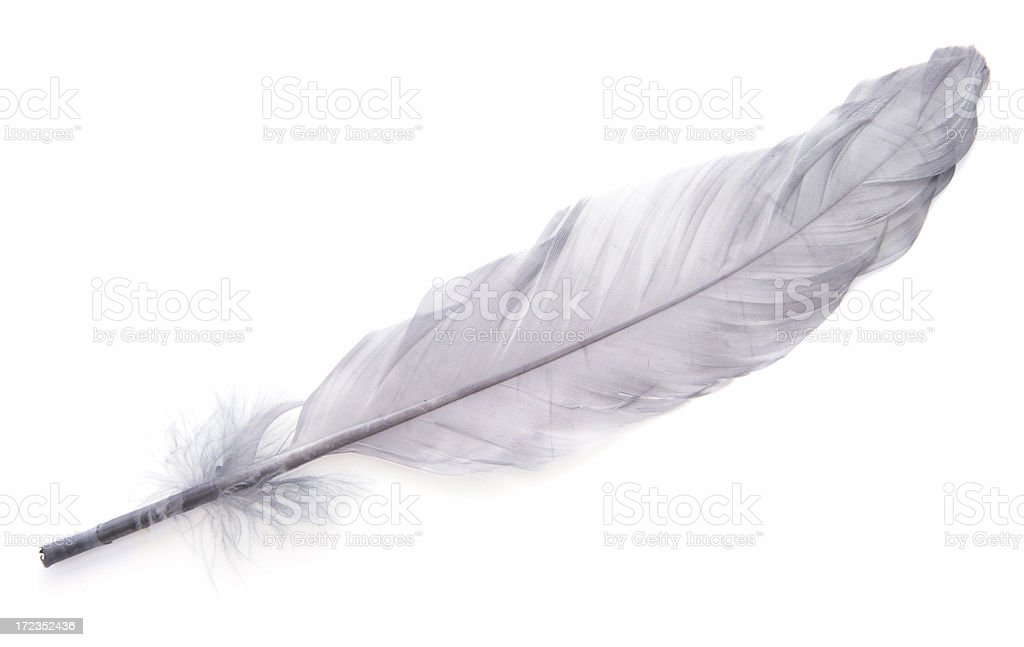 Elegant Feather stock photo