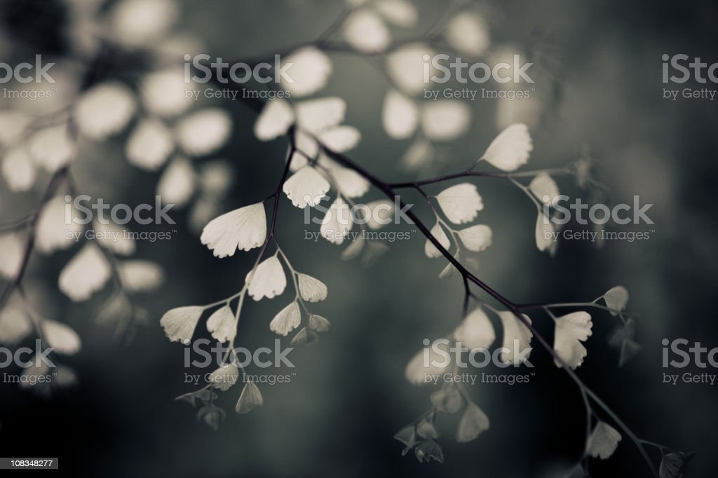 elegant flora royalty-free stock photo
