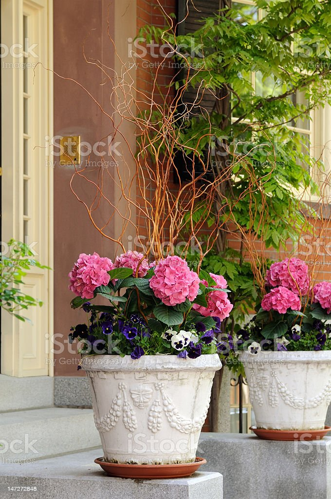 Elegant Flower Pot with Pink Hidrangea and Pansies royalty-free stock photo