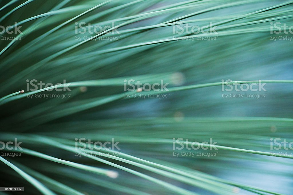 Elegant green lines of a succulent plant royalty-free stock photo