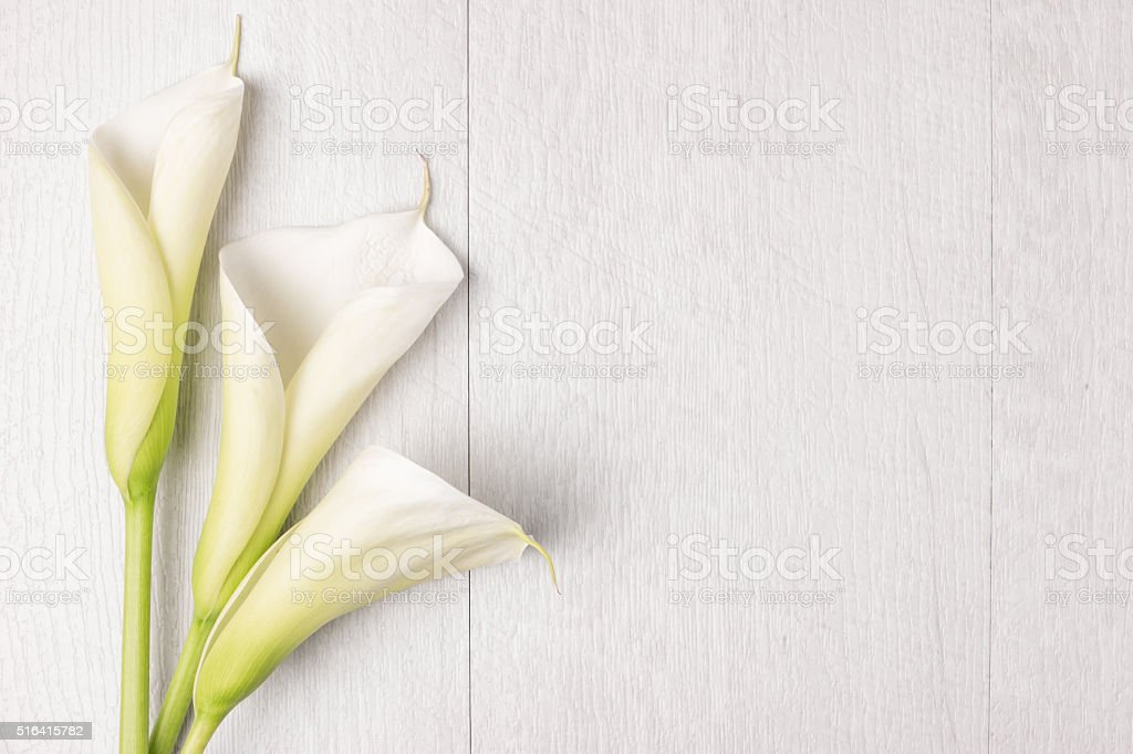 Elegant spring flower, calla lily stock photo