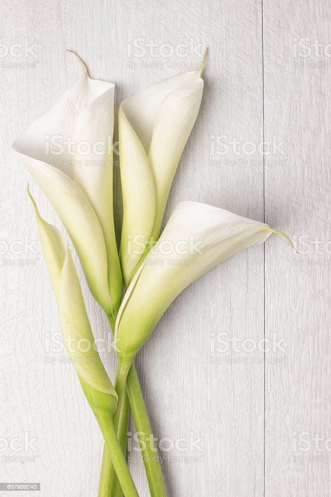 Elegant spring flower, calla lily stock photo