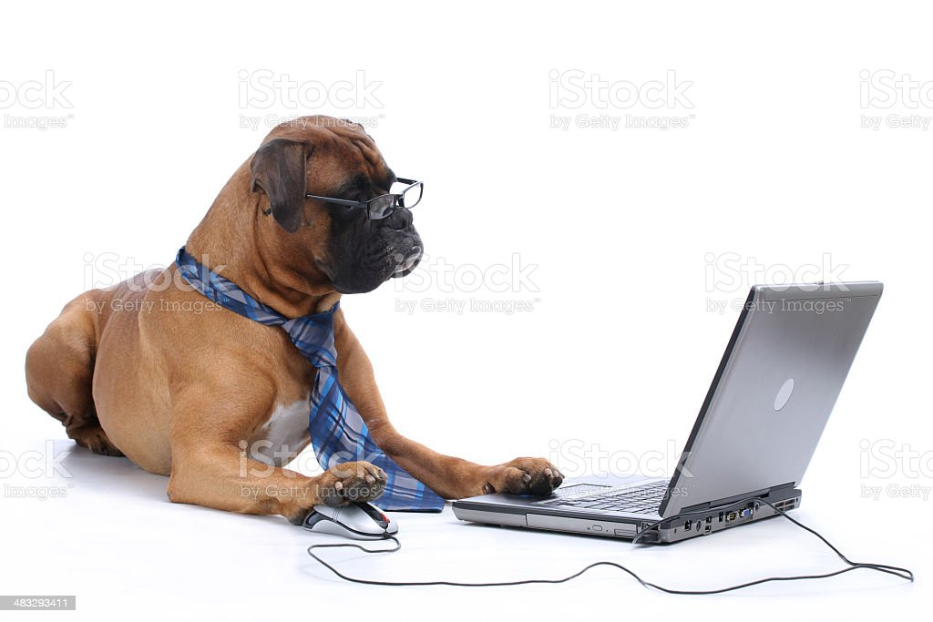 Elegant  working on laptop stock photo