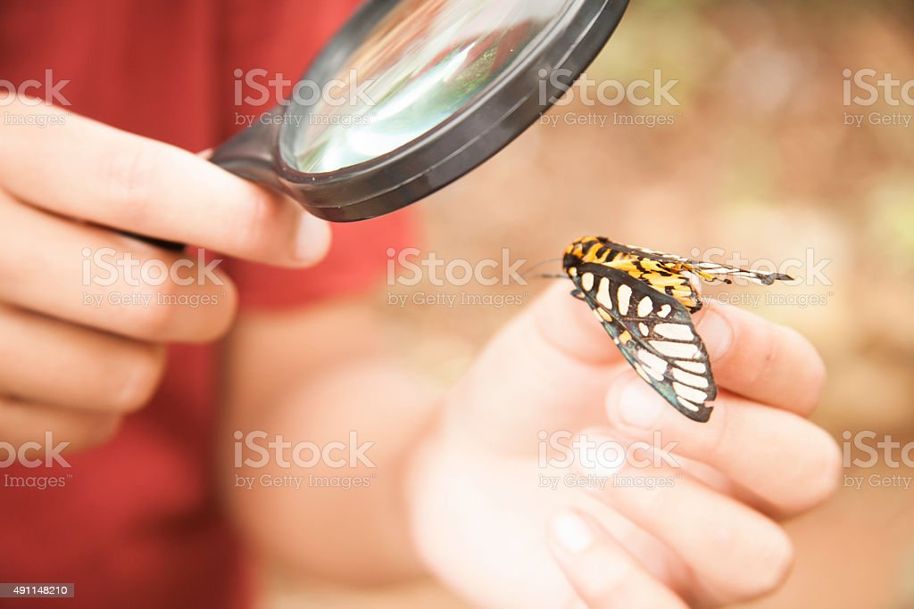 Elementary age boy enjoys discovering nature. Magnifying glass. stock photo