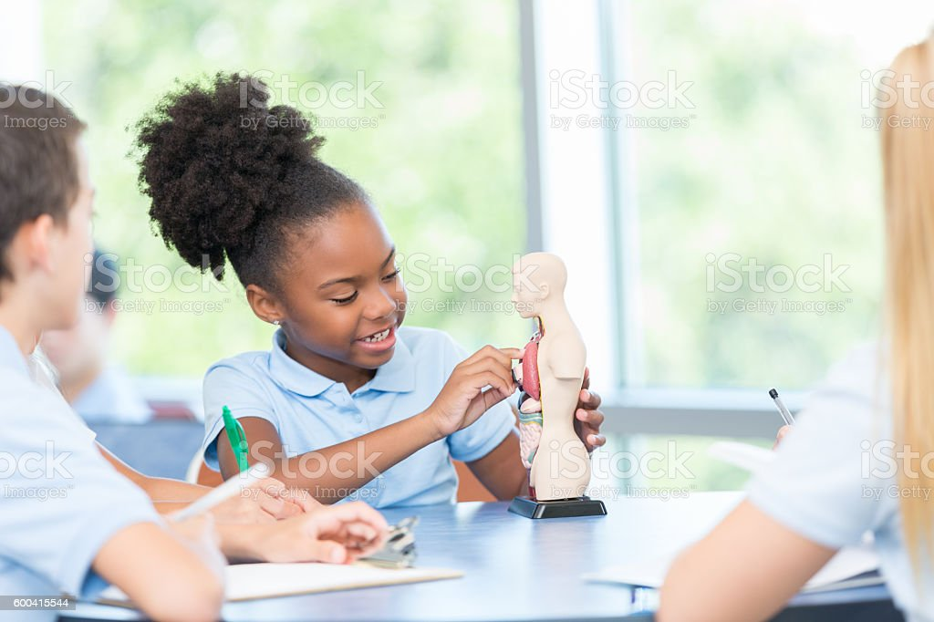 Elementary age student studying human body in science class stock photo
