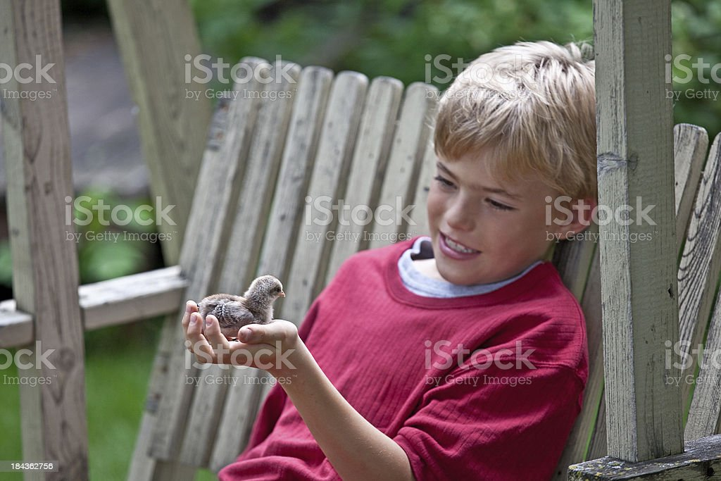Elementary Boy with a Baby Chick royalty-free stock photo