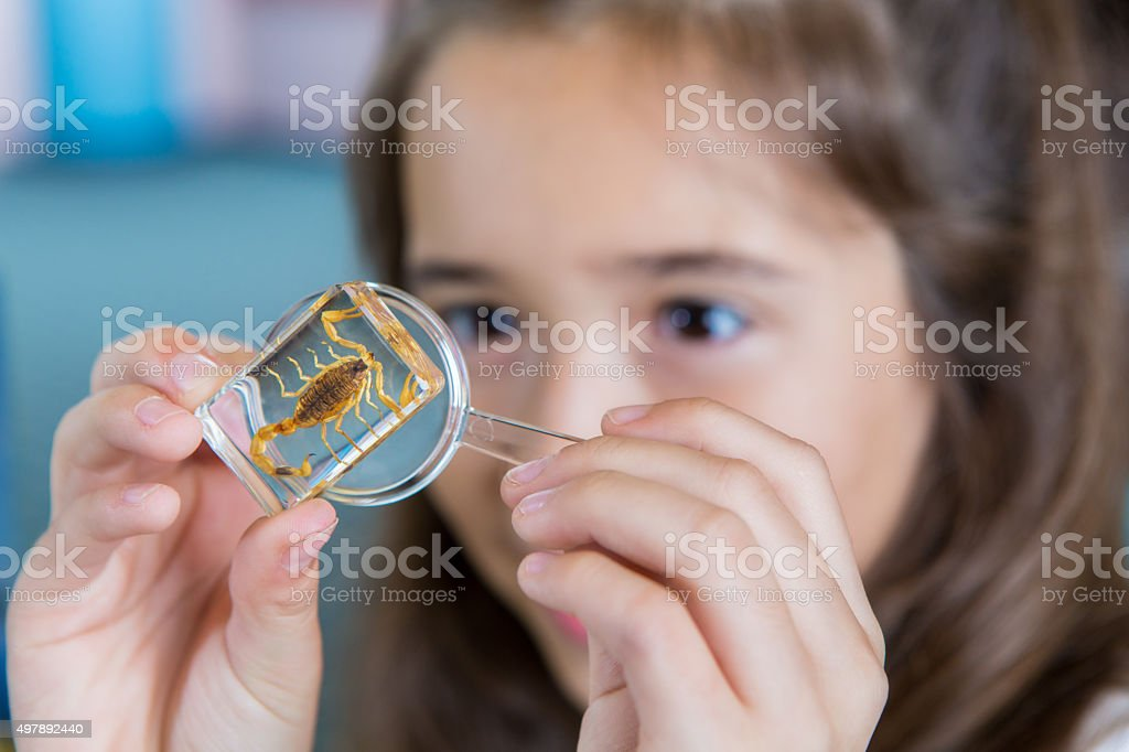 Elementary school girl examining bugs in science class stock photo