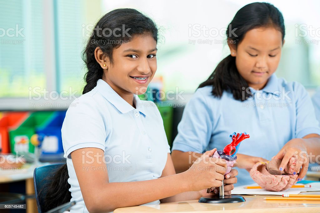 Elementary school students work on human anatomy models stock photo