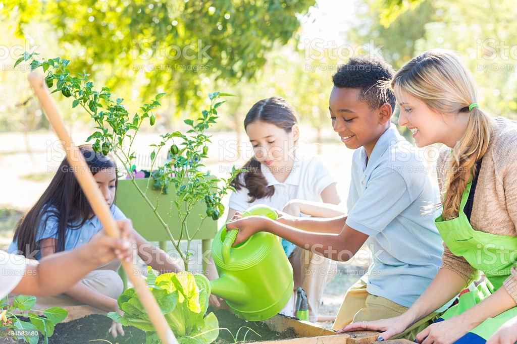 Elementary students planting vegetables in school garden for science class stock photo