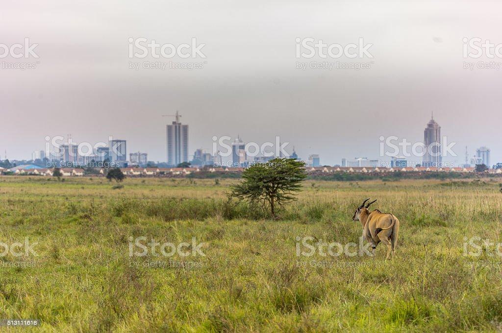 Elenantilope mit Nairobi Skyline stock photo