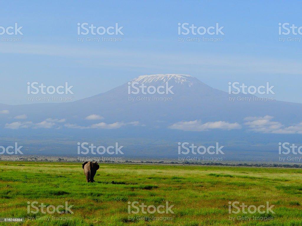 Elephan and Kilimanjaro stock photo