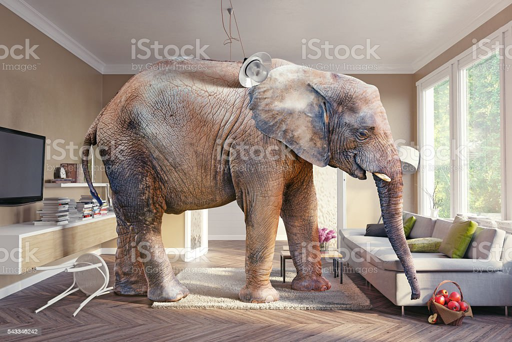 elephant and  apples stock photo