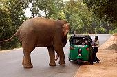 Elephant and Auto Rickshaw