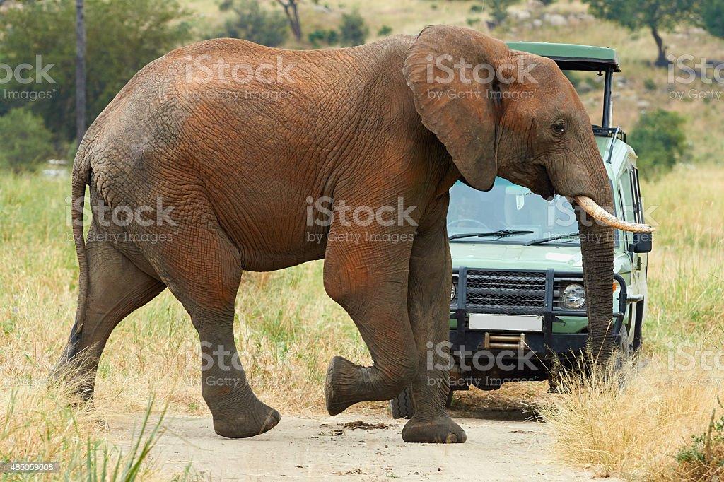 Elephant and car stock photo