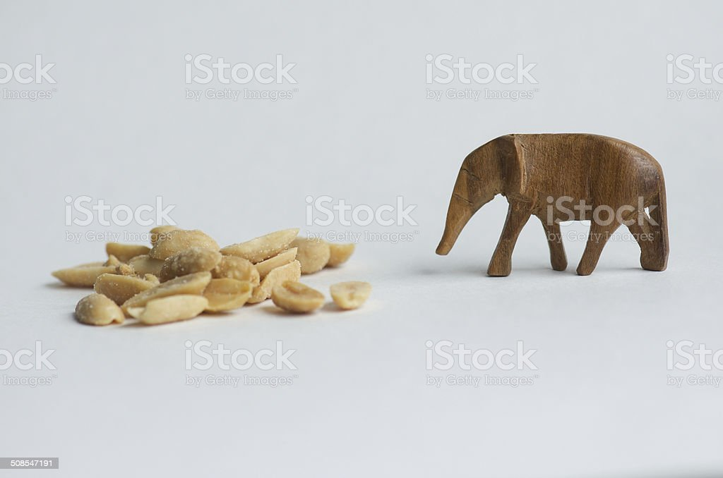 Elephant and Peanuts stock photo