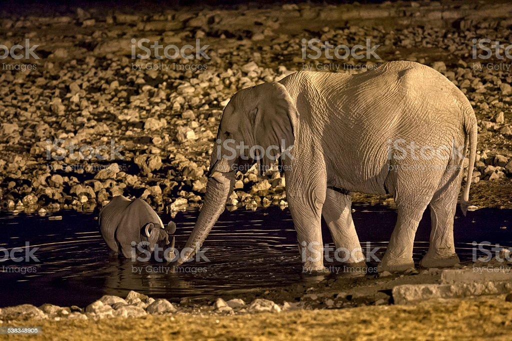 Elephant and Rhino having a altercation at Okaukuejo waterhole stock photo
