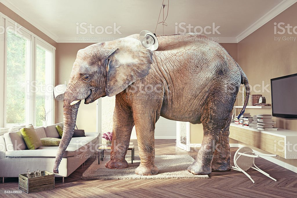 elephant and the beer stock photo