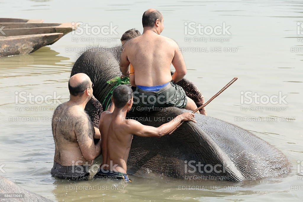 Elephant at bath. Chitwan-Nepal. 0866 stock photo