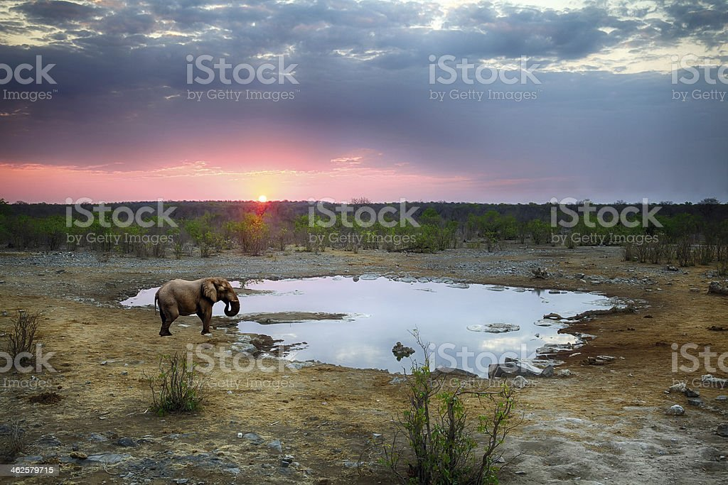 Elephant at sunset, Namibia stock photo