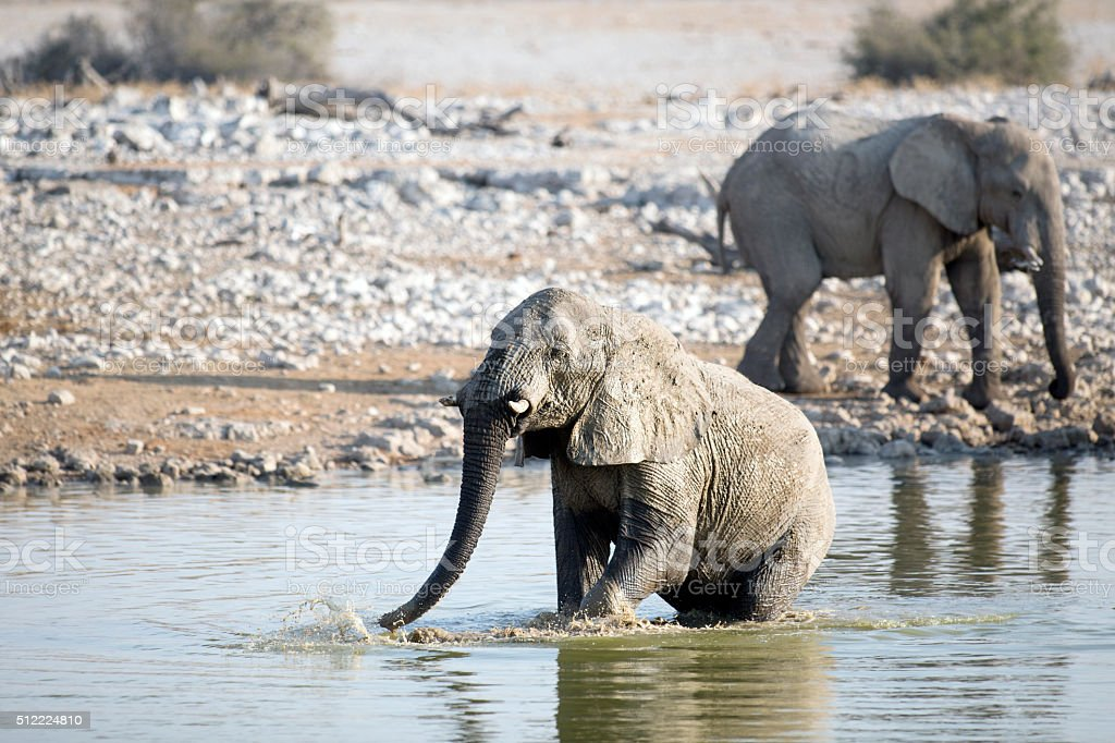 Elephant at the Okaukuejo water hole stock photo