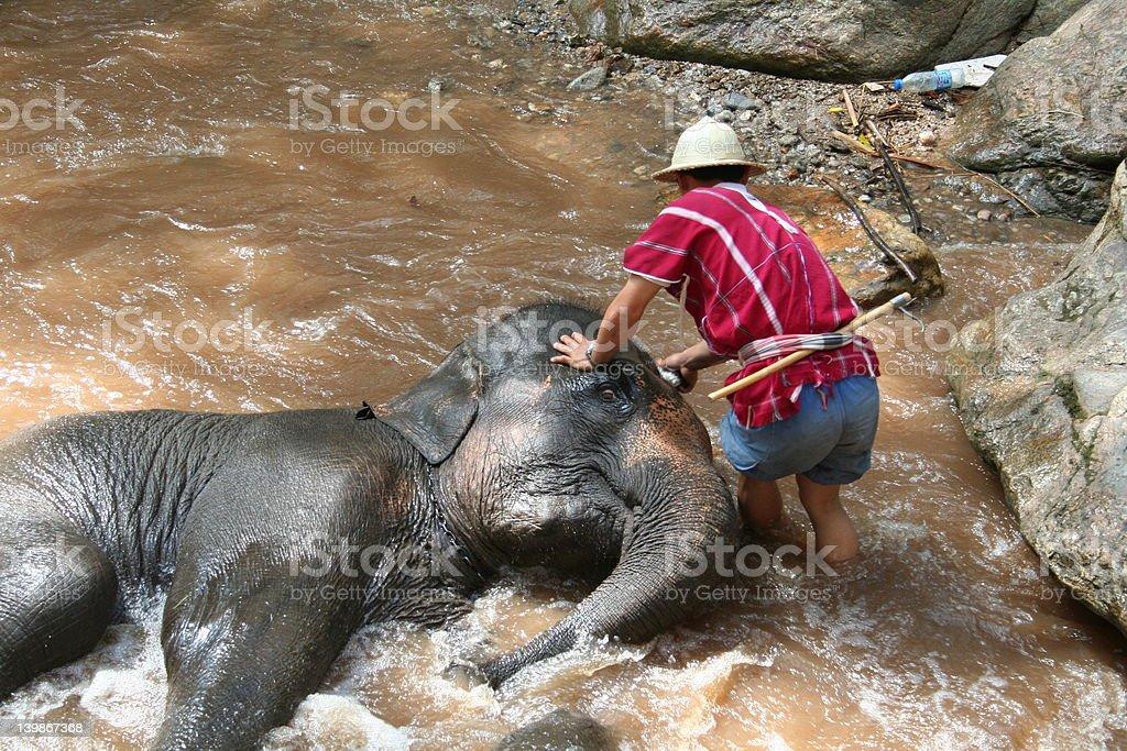 水浴びをする象 ロイヤリティフリーストックフォト