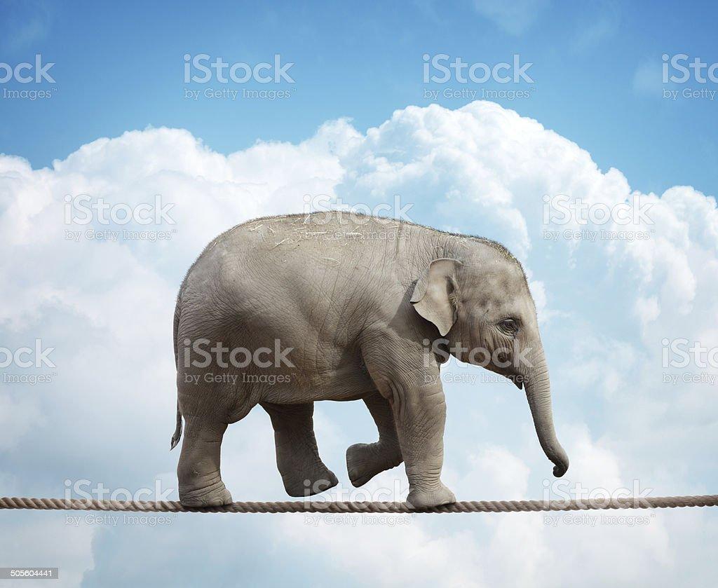 Elephant calf on tightrope stock photo