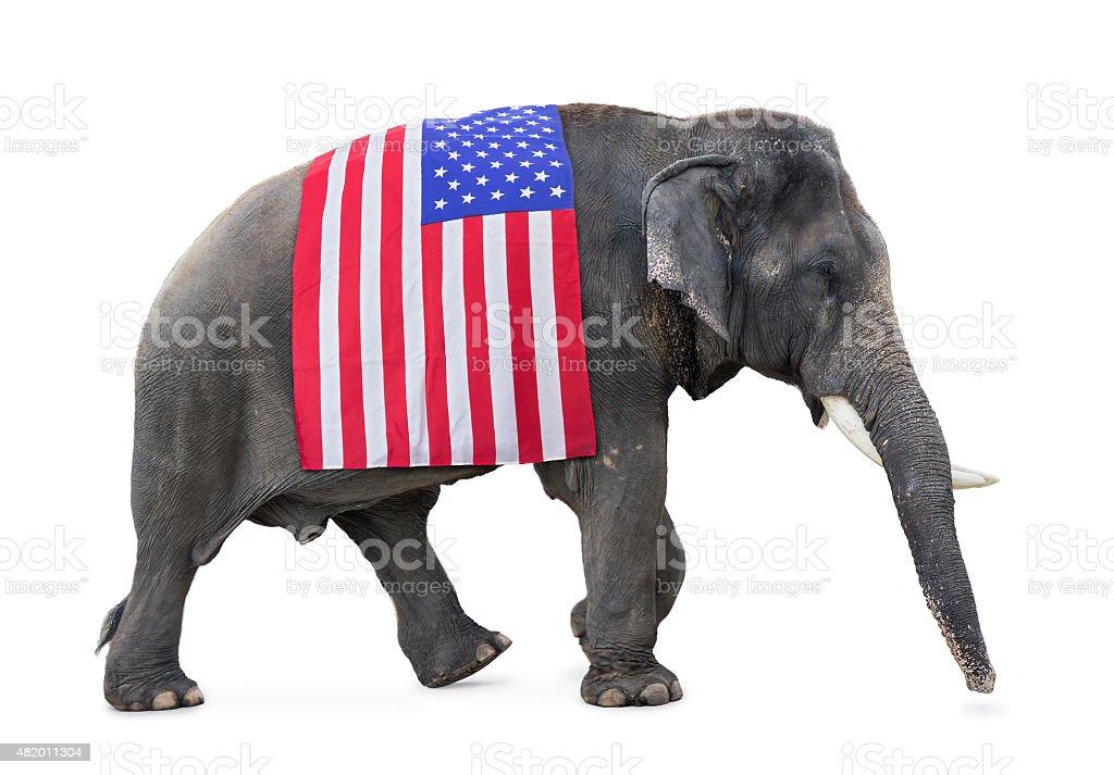 elephant carries a flag USA stock photo