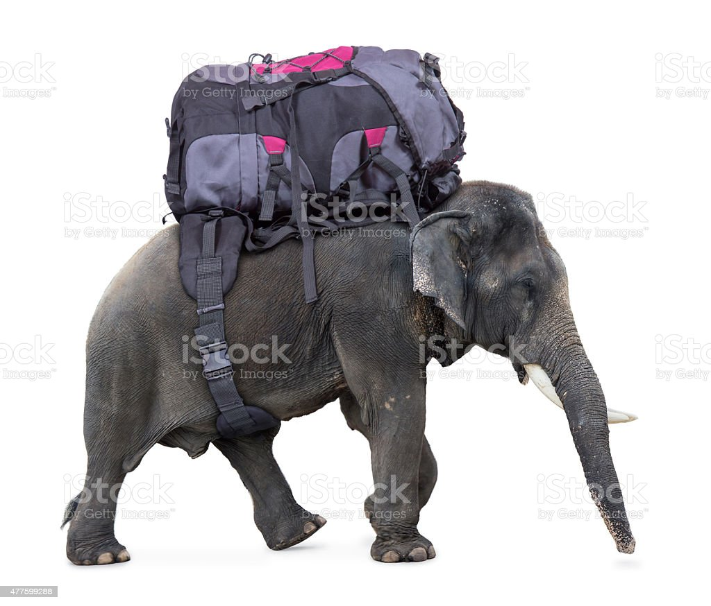 elephant carries a large backpack stock photo