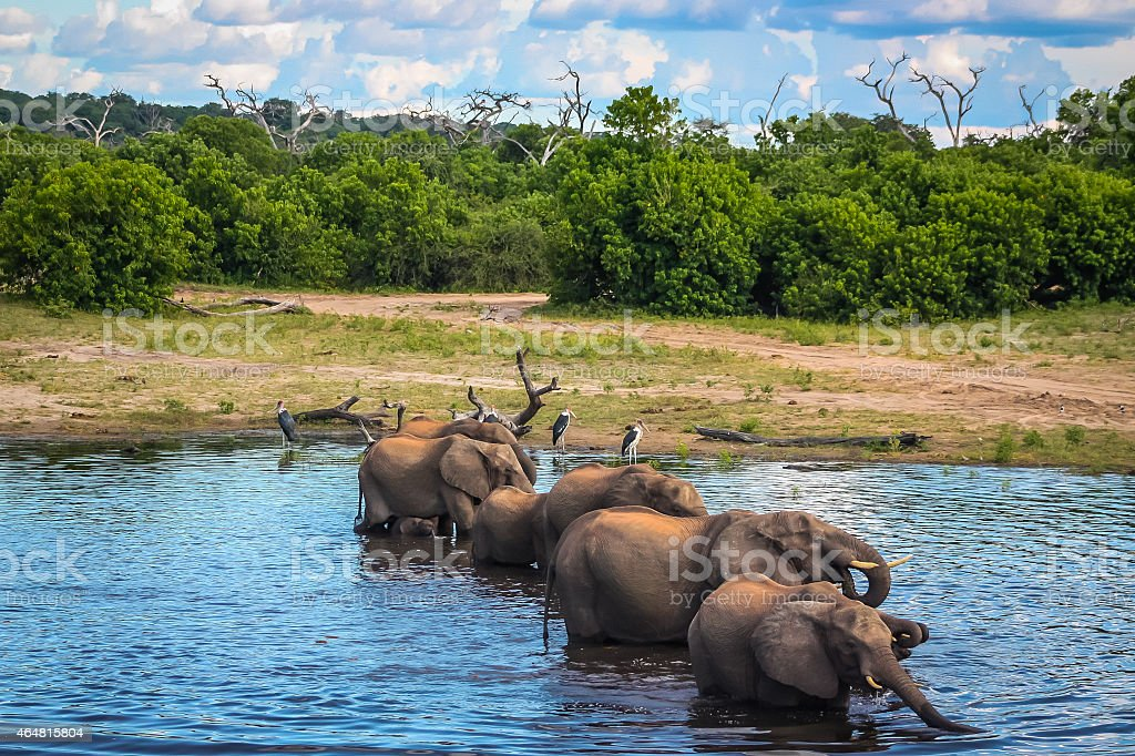 Elephant Chorus Line stock photo