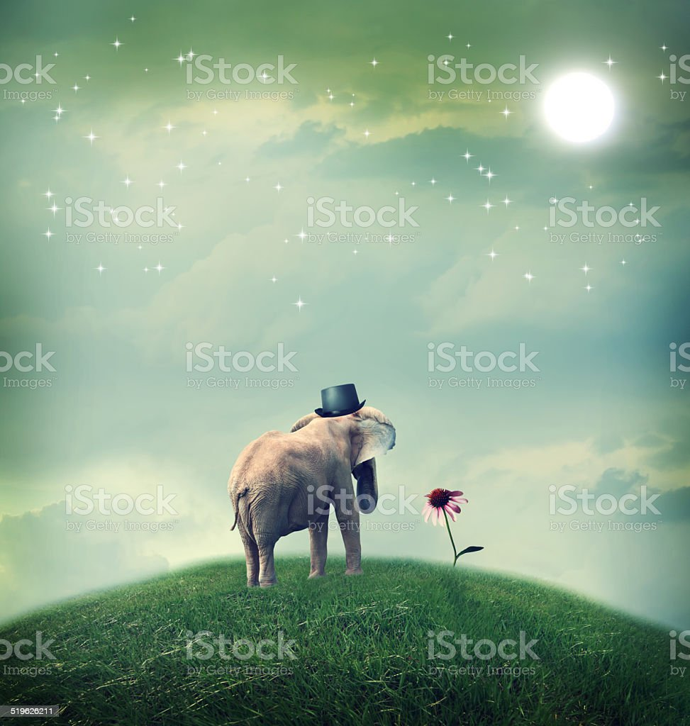 Elephant contemplating a flower stock photo