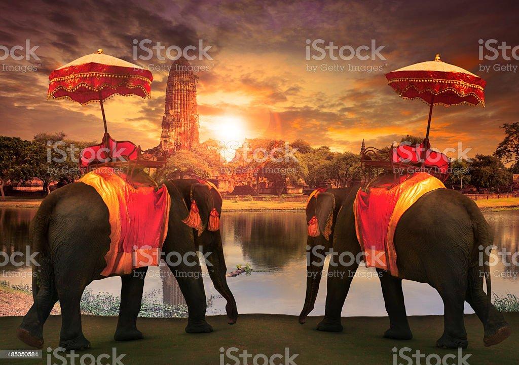 elephant dressing with thai kingdom tradition stock photo