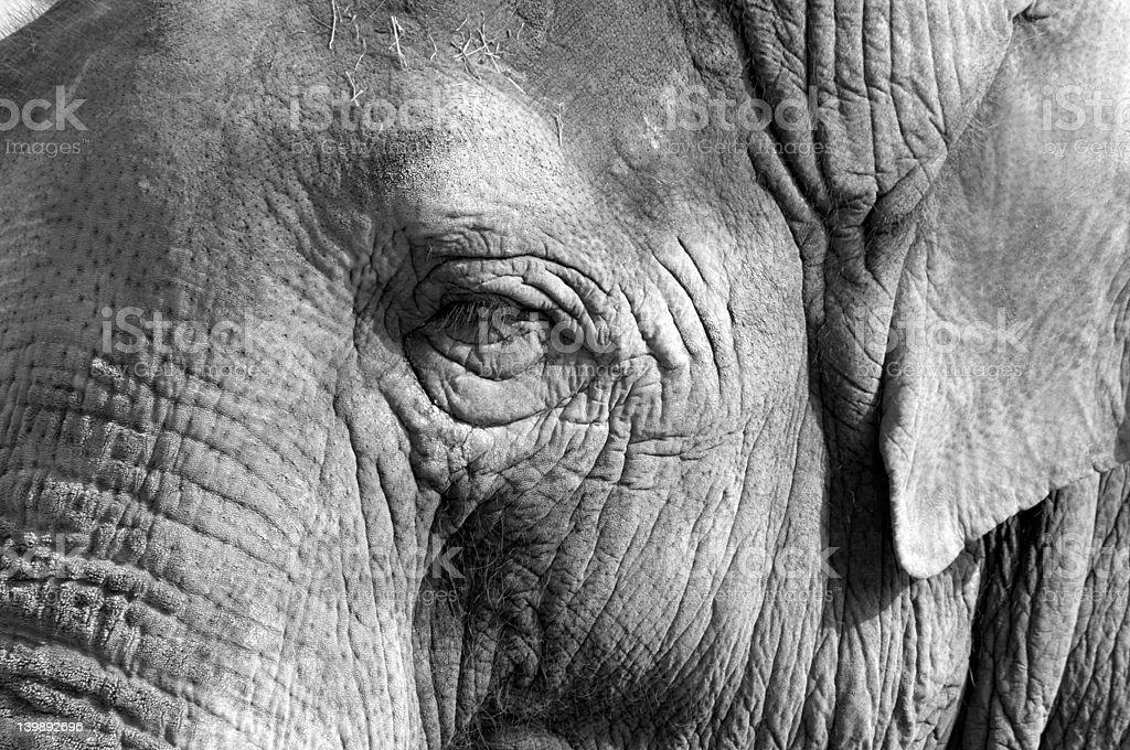 Elephant eye stock photo