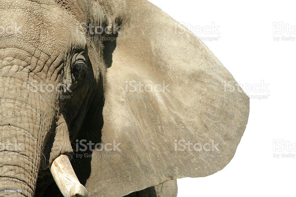 Elephant Face stock photo