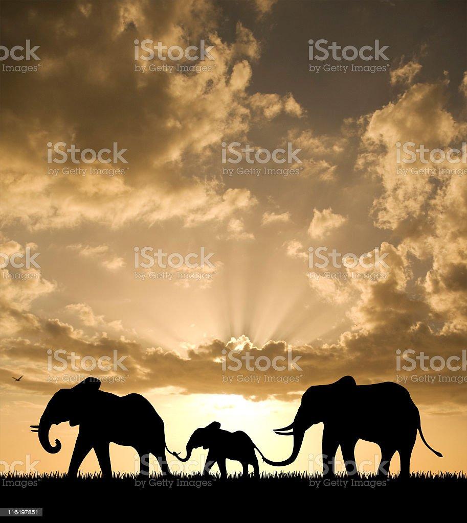 Elephant Family at Sunset stock photo