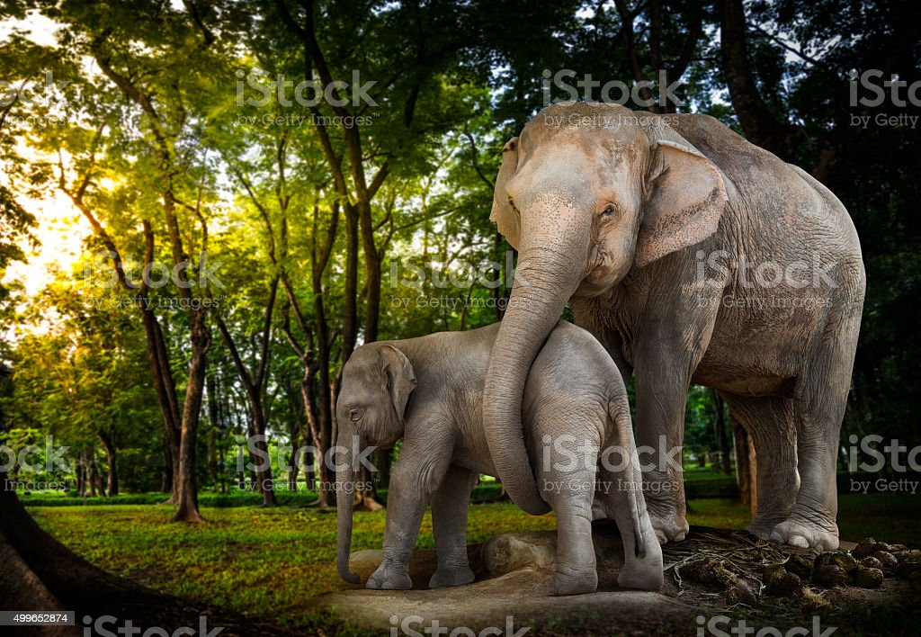 Elephant family in forest stock photo