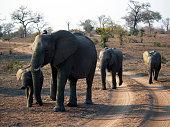 Elephant family - south africa