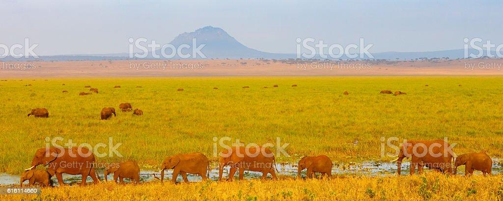 Elephant Herd at Tarangire National Park, Tanzania Africa stock photo