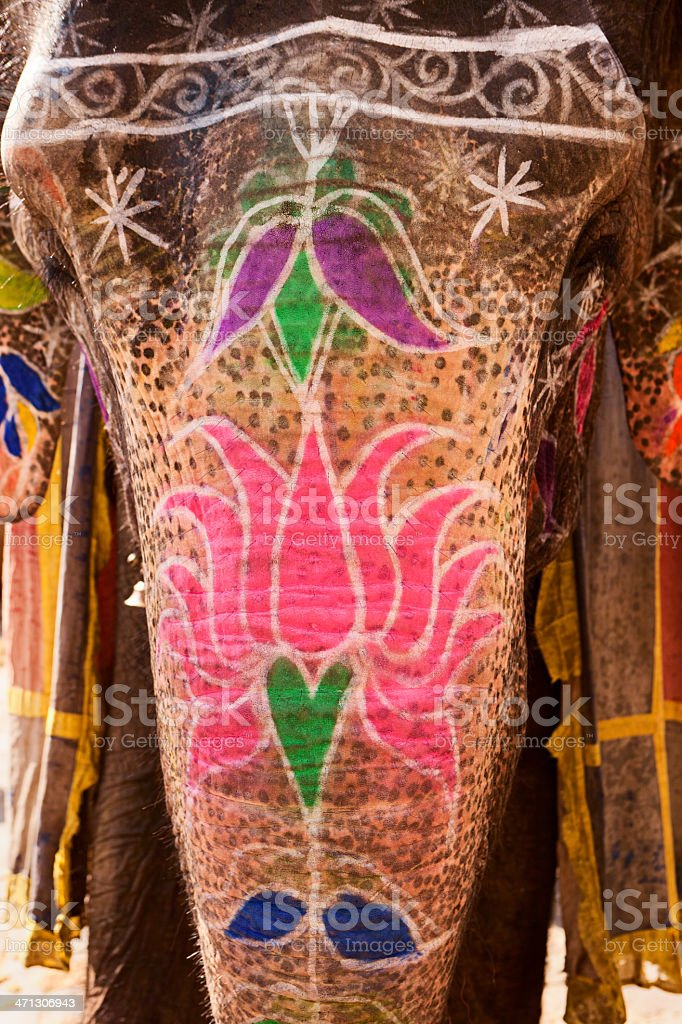 Elephant in Amber Fort, Jaipur, India royalty-free stock photo