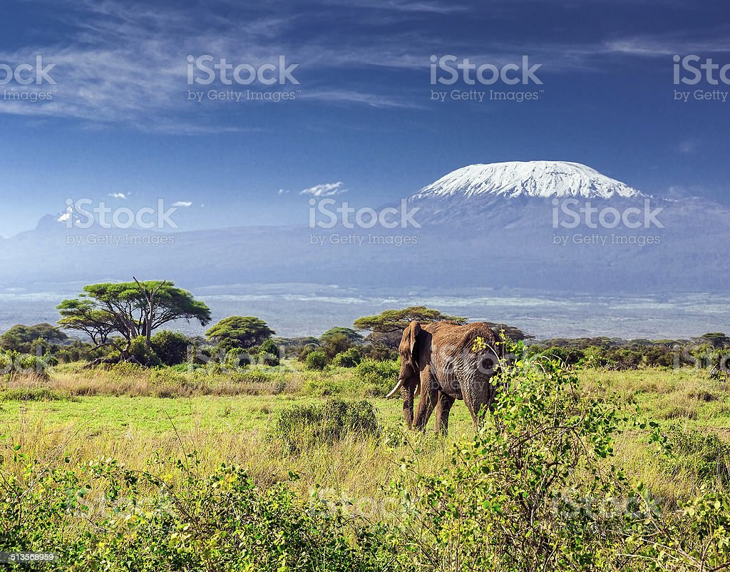 Elephant in front of Mount Kilimanjaro & Mawenzi Peak stock photo