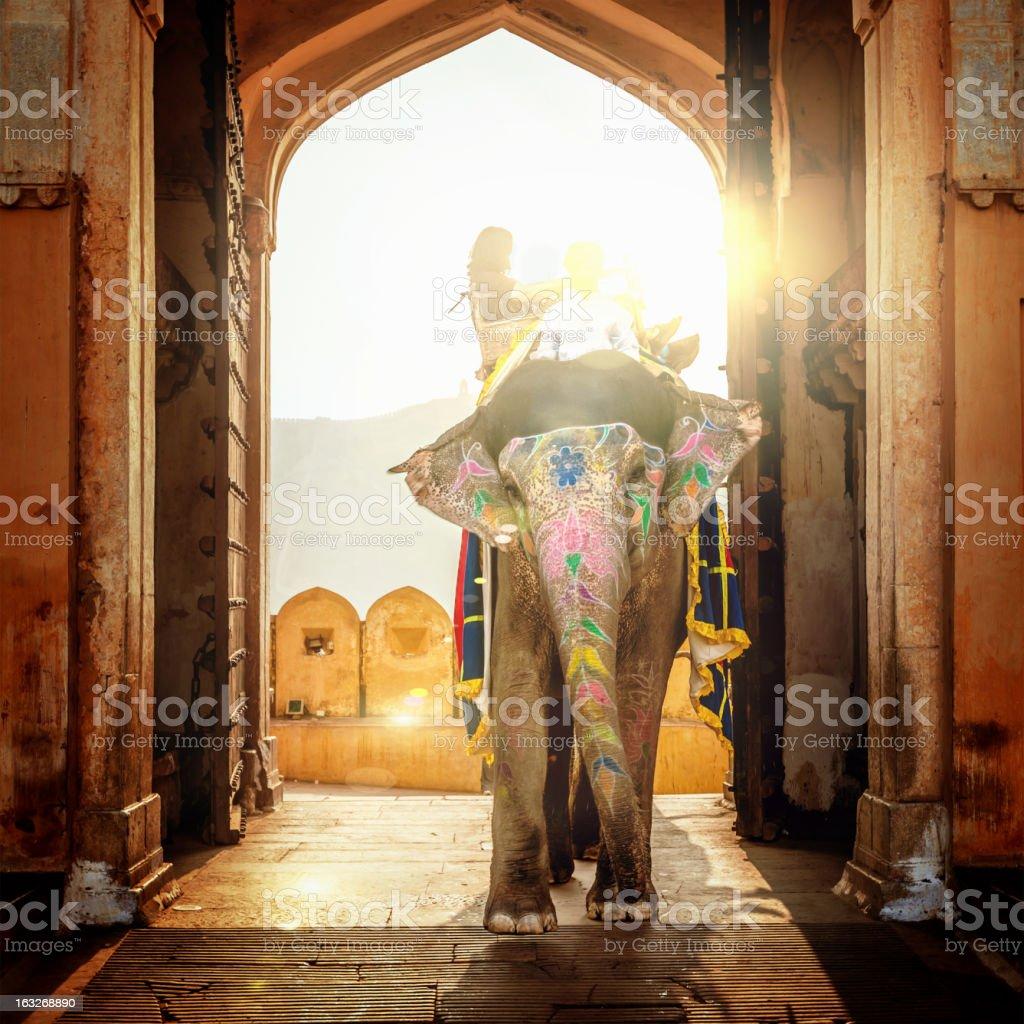 Elephant in India stock photo