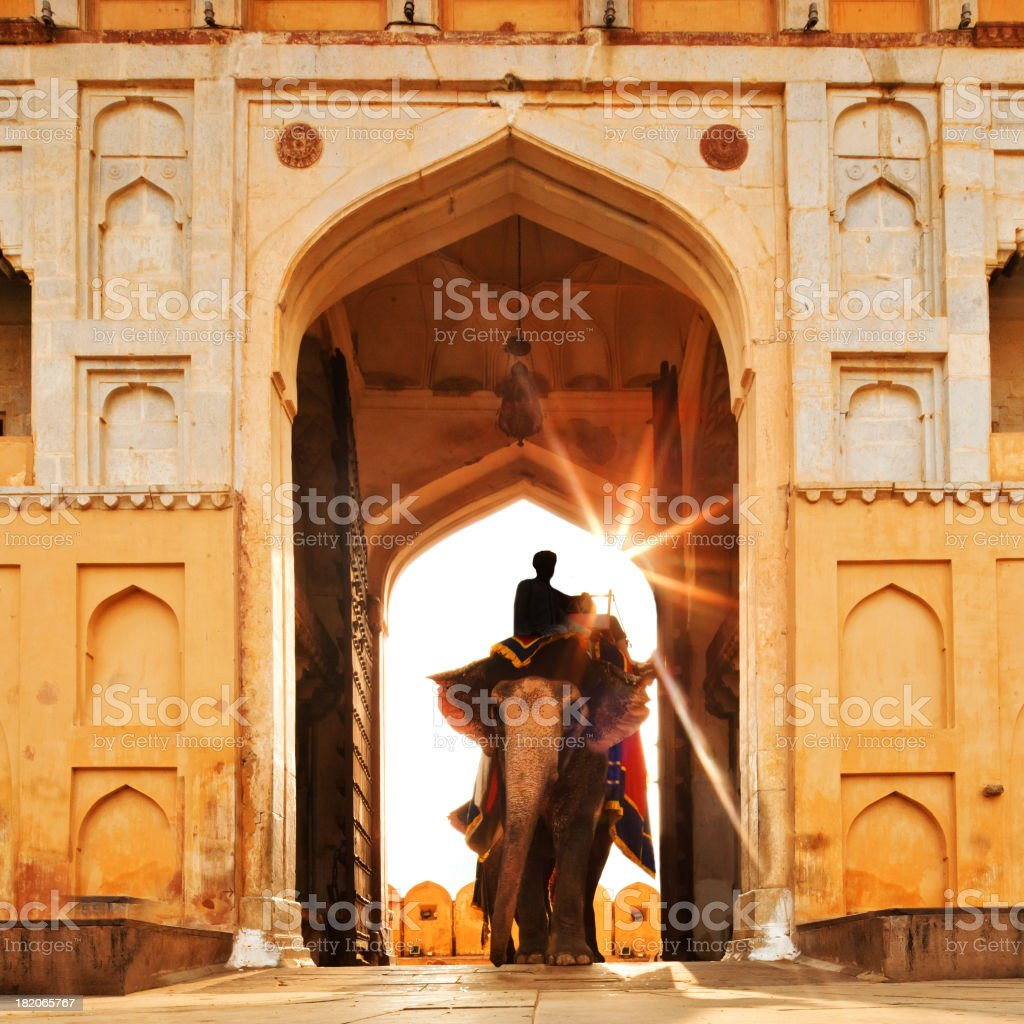 Elephant in India stock photo