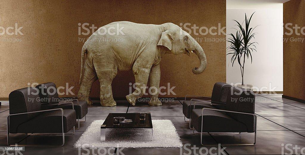 elephant in interior stock photo