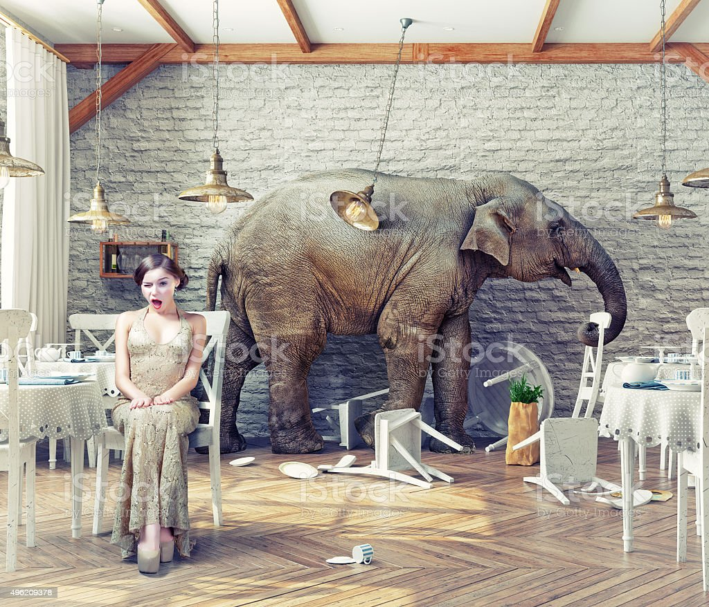 elephant  in  restaurant stock photo