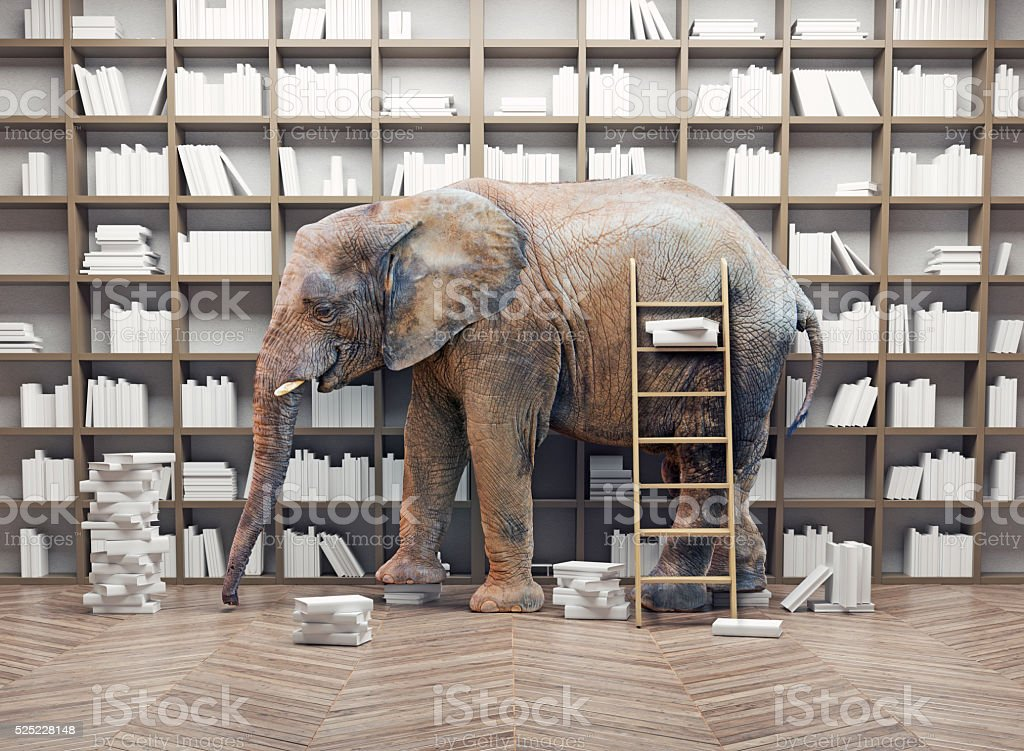 elephant  in the  library stock photo
