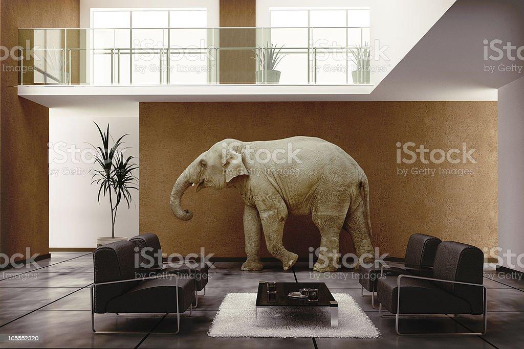 elephant indoor royalty-free stock photo