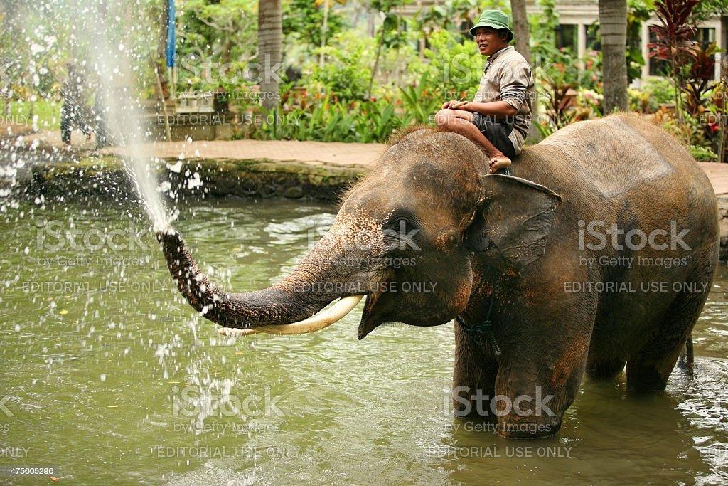 Elephant keeper stock photo