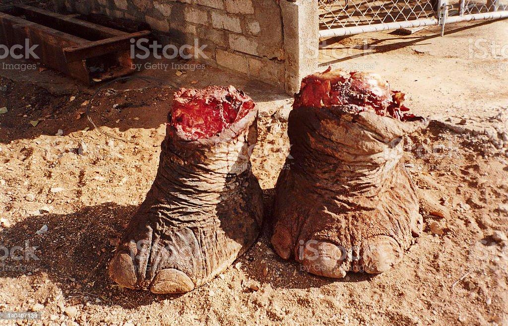 elephant legs stock photo