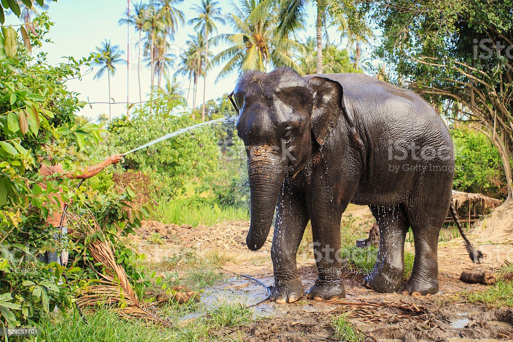 Elephant make shower stock photo