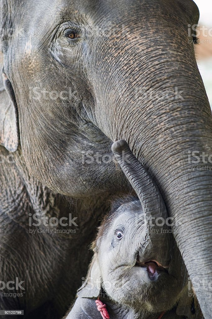 Elephant mother and child royalty-free stock photo